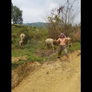 gambar foto Iwan Fals telanjang sapi