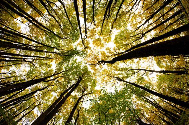 nature writing copo tique essai doc la vie secr te des arbres