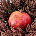 Granaty w walce z nowotworami i chorobami serca