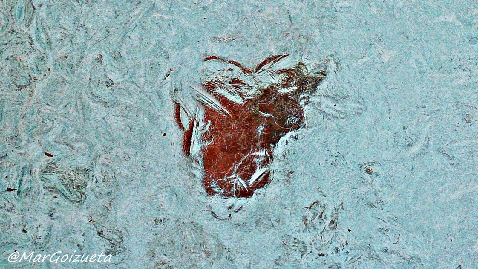 Corazón congelado. Foto Mar Goizueta