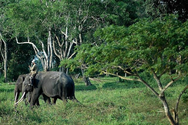 Indahnya Taman Nasional Way Kambas Di Lampung, Please Share..!!