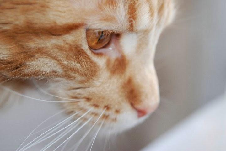 Sielska Chata Kot W Pustym Mieszkaniu