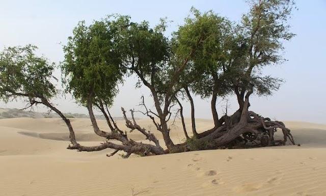 تھر کے صحرا میں رقص کرتی موت... از قمر نقیب خان