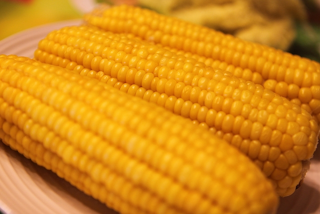 Maize (ভুট্টা)  Corn for Sale