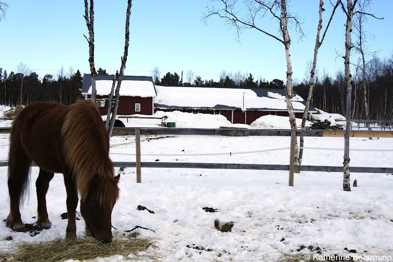 Ofelas Farm Outdoor Winter Activities in Sweden's Lapland