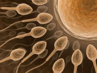 Tips Agar Sperma Subur & Berkualitas