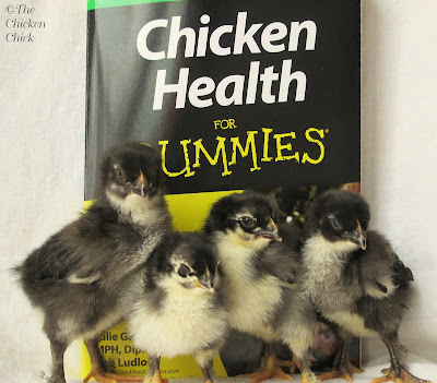 Chicken Health for Dummies Book Review