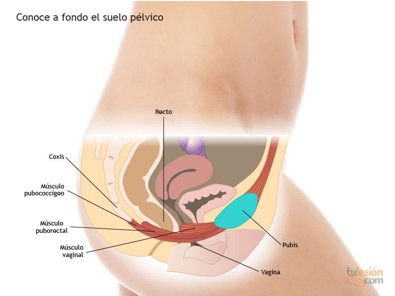 Famoso Anatomía Para El Deporte Y El Ejercicio Regalo - Imágenes de ...