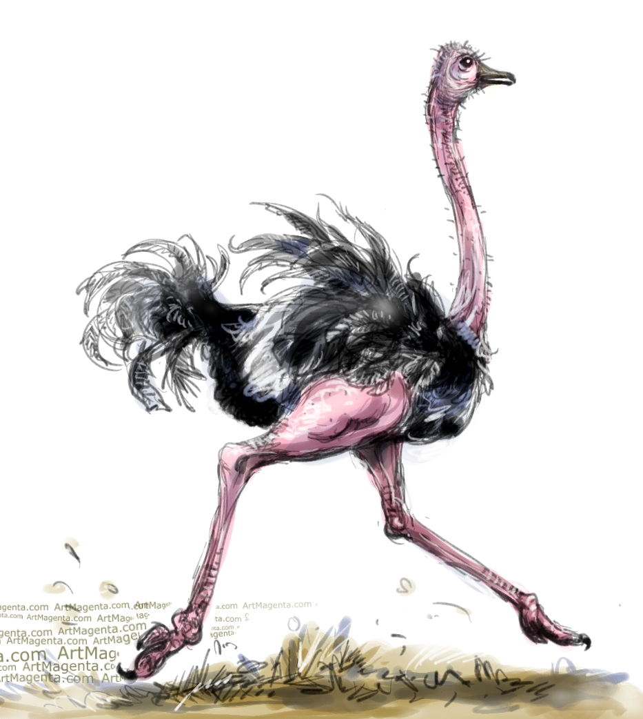 Ostrich sketch painting. Bird art drawing by illustrator Artmagenta