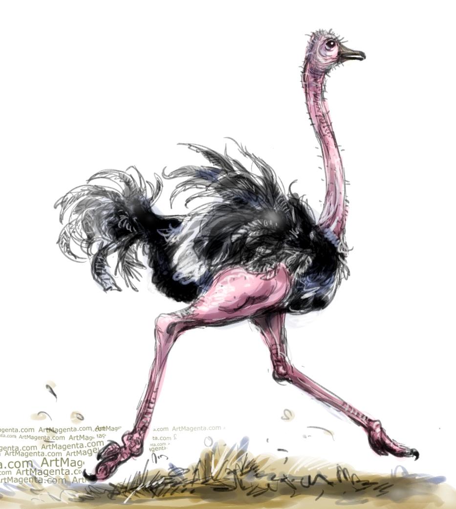 Ostrich sketch painting. Bird art drawing by illustrator Artmagenta