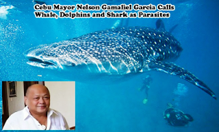 Mayor Whales