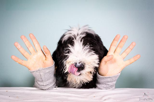 Hundefotografie, Hundegeburstag, Geburtstag, Indianermädchen und Wildfang