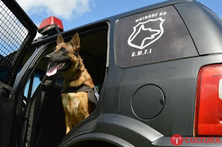 Guarda Municipal de Foz do Iguaçu (PR) perderá cães da Unidade K9
