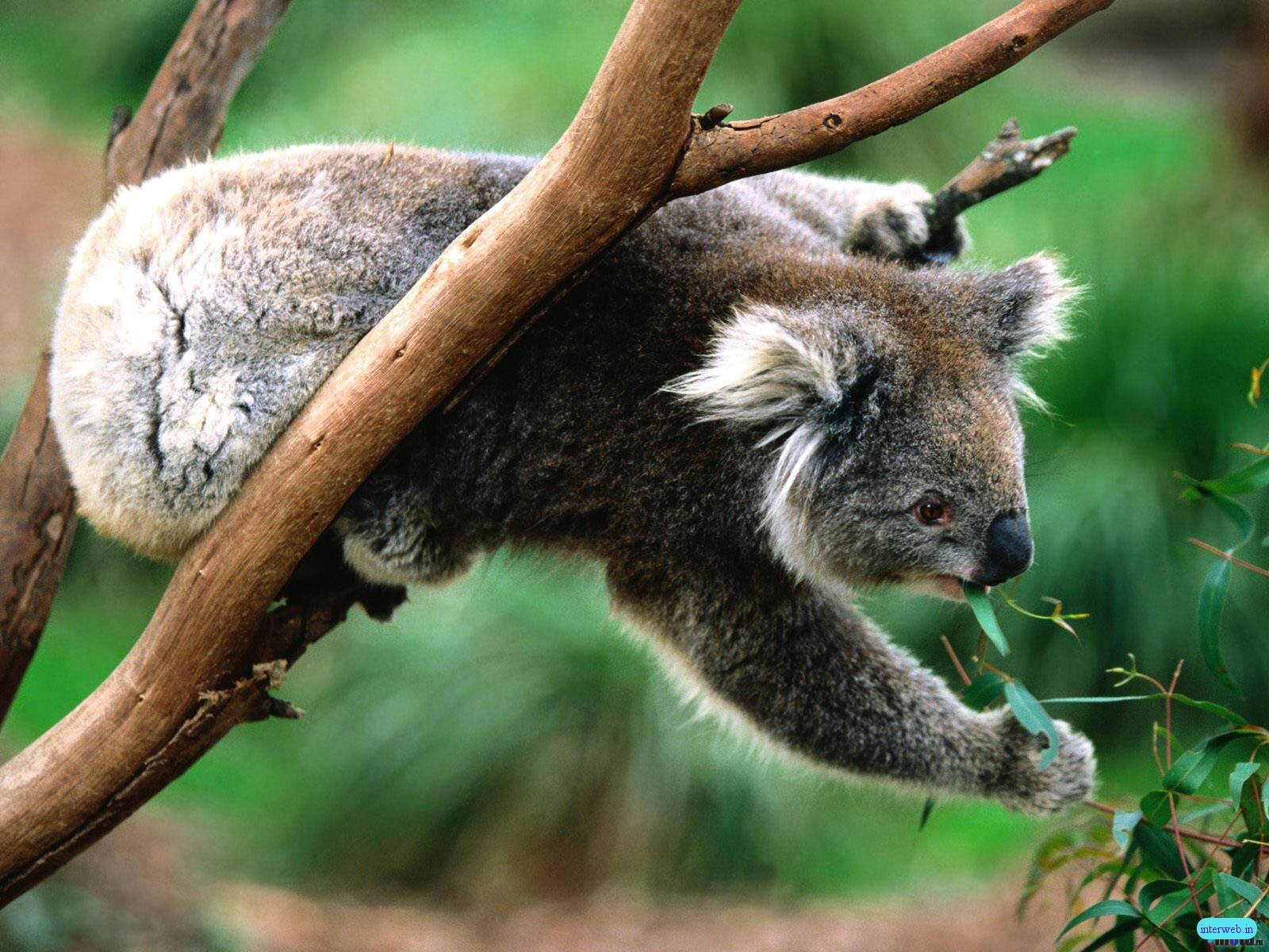 Animals Wallpapers The Best Animal Wallpapers You Ever