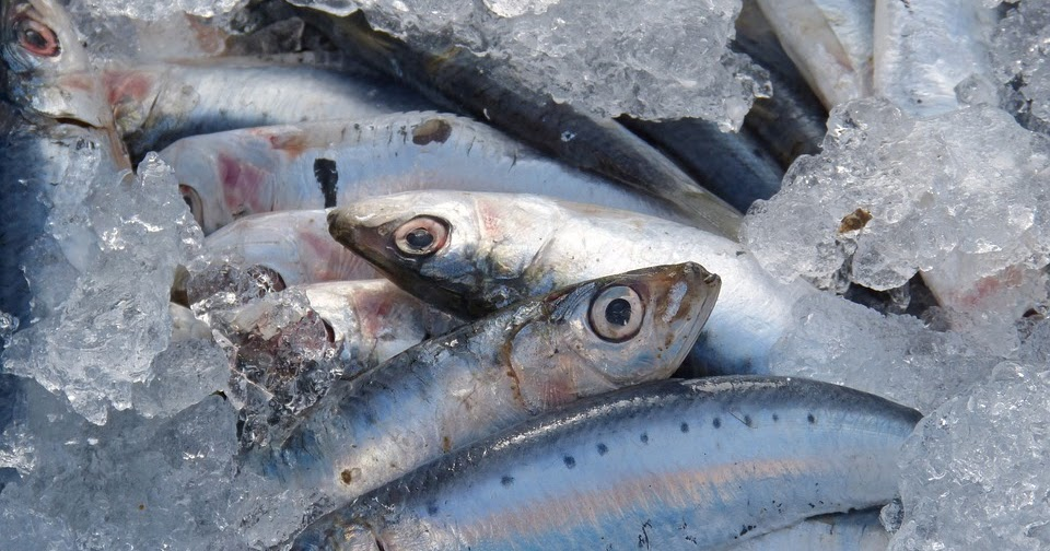 Pesca y gastronom a cocinar sardinas sin que te huela - Como cocinar sardinas ...