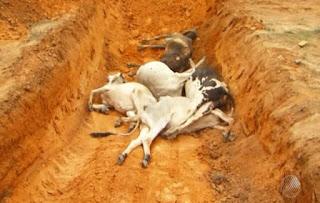 Morte de 125 animais