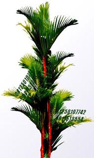 Palm Pinang Merah | Jasa Tukang Taman Surabaya
