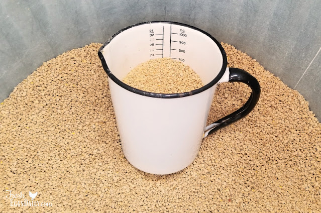 scoop in chicken feed bin