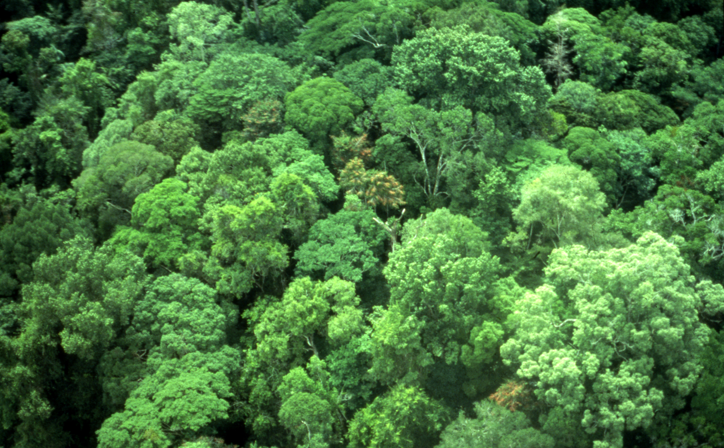 Politics and its Discontents: Distinguishing The Forest From