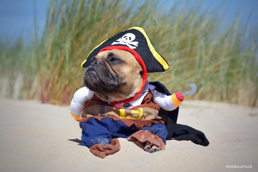 Dog Pirat