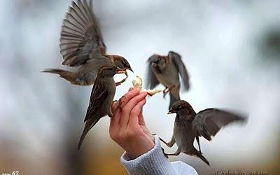 beri makan burung
