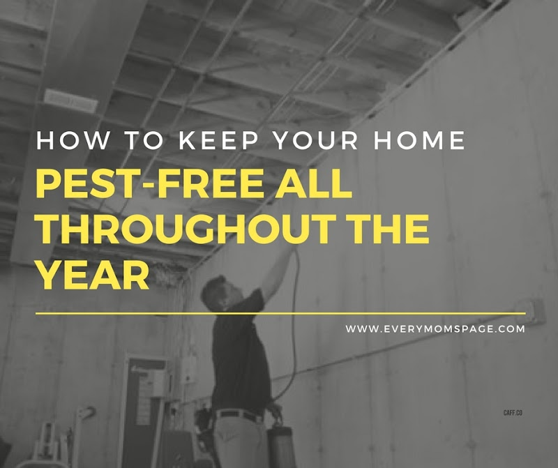 How To Keep Your Home Pest-Free All Throughout The Year