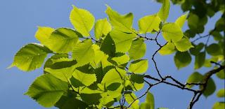 download soal uh ipa kelas 5 bab tumbuhan hijau semester 1 kurikulum ktsp