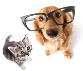 Parcourez notre comparateur d'assurance chien-chat, lequel vous permettra d'éditer des devis. Gratuits et sans engagement, ils vous permettront de trouver la meilleure mutuelle chien – chat adaptée à votre budget et à vos attentes.  Différentes formules d'assurance santé pour chiens et chats existent, et vous permettent de protéger et soigner votre animal à quatre pattes plus sereinement.    En fonction de la formule choisie (juste le nécessaire ou l'option complète), vous assurez les soins pour votre animal :