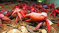 Diduga Keracunan Kepiting Liar Warga O'o Donggo Meninggal