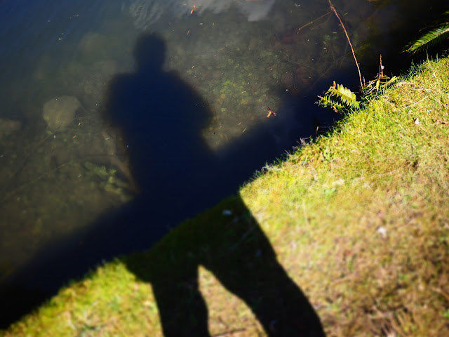 Shadow by the pond