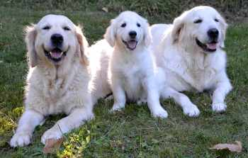 Dog Daycare: What You Need to Know