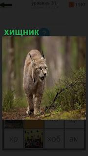 1100 слов в лесу бродит одинокий хищник 31 уровень