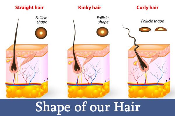 Shape of the Hair