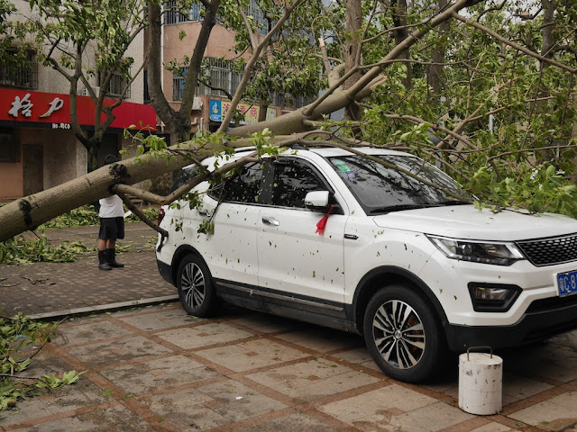 tree which feel on a parked vehicle