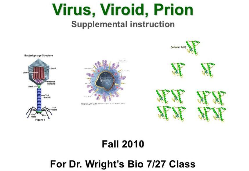 Jelaskan perbedaan antara virus, virion, prion   Pak ...