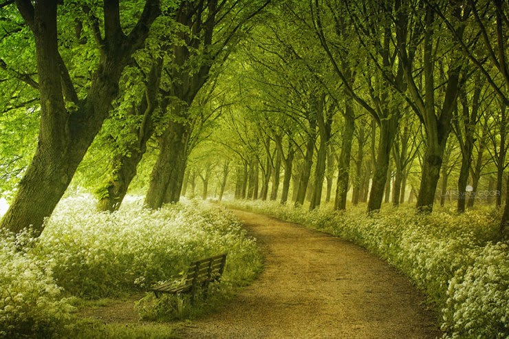 5. Spring in the Netherlands - 29 Wonderful Paths