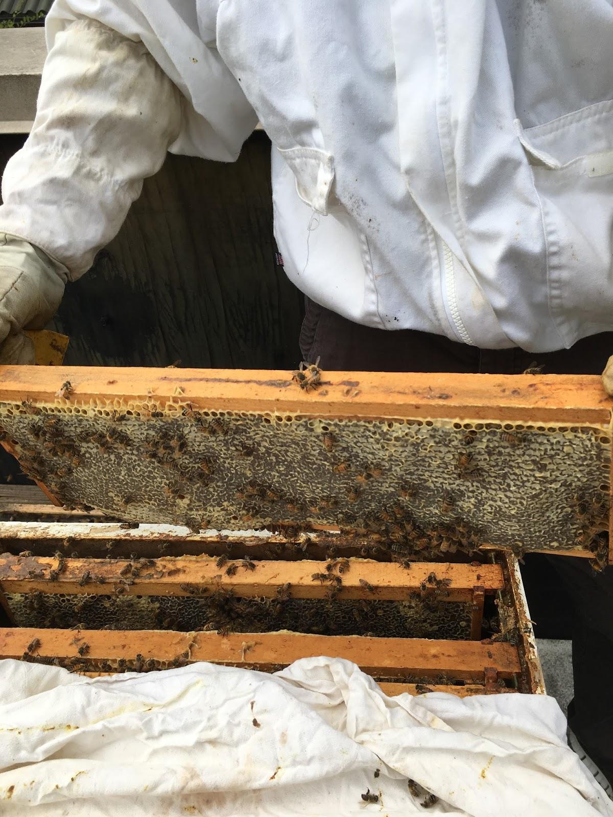 linda u0027s bees