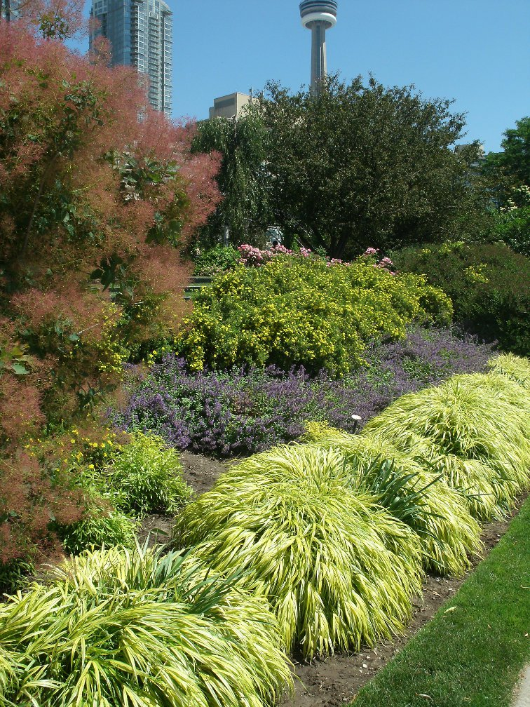 Toronto Music Garden gigue section in the summer by garden muses- a toronto gardening blog