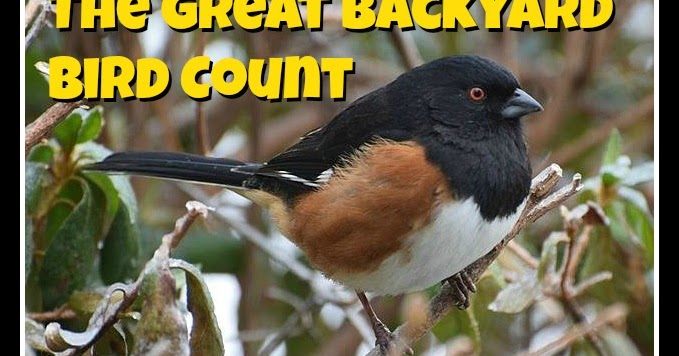mommy maestra the 2016 great backyard bird count