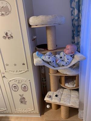 Katzen Kratzbaum Baby