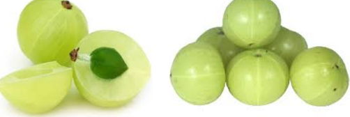 Indian Gooseberry (Amla)  for Urinary Tract Infection (UTI)