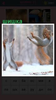 зимой в снегу белки играют с шишкой на задних лапах
