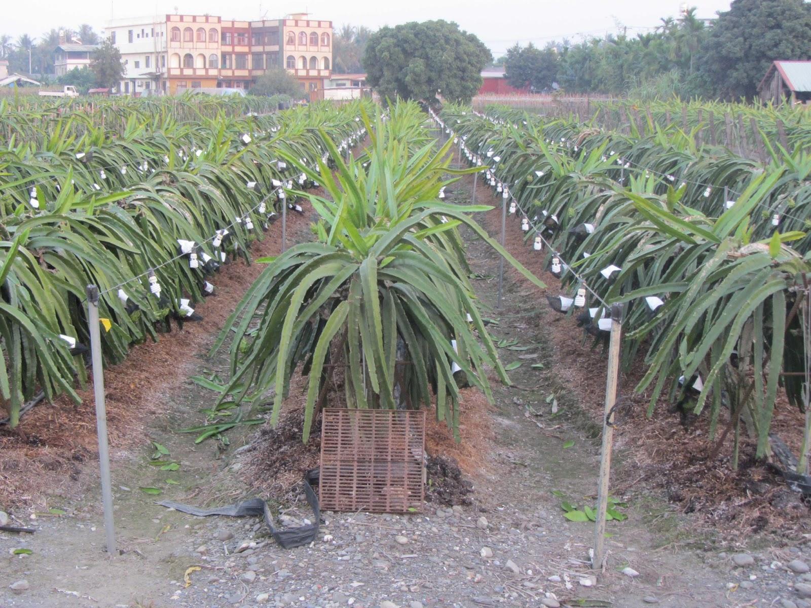 Estudiando Agricultura En Taiw N Tutores Y Bombillas En
