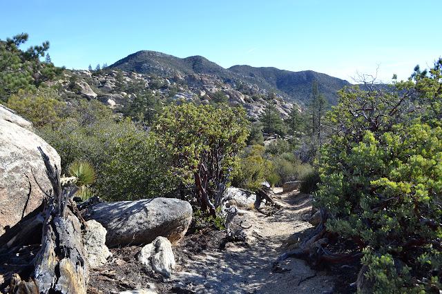 trail gully between manzanita