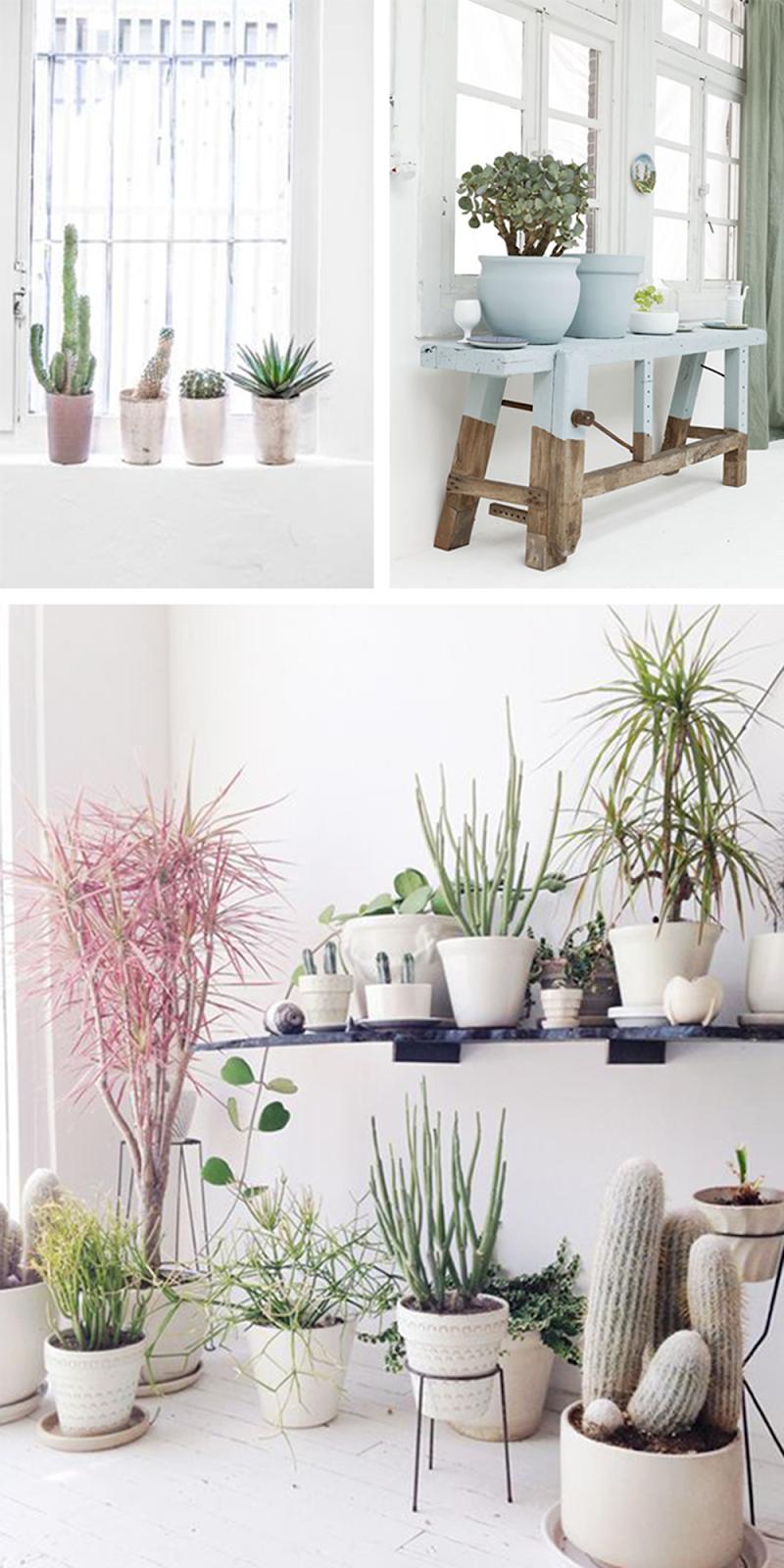 piante da appartamento e interni con tanta luce