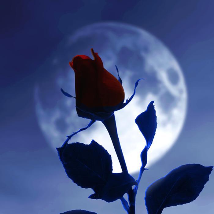 Semente Reflexão Blog Lua Eclipse
