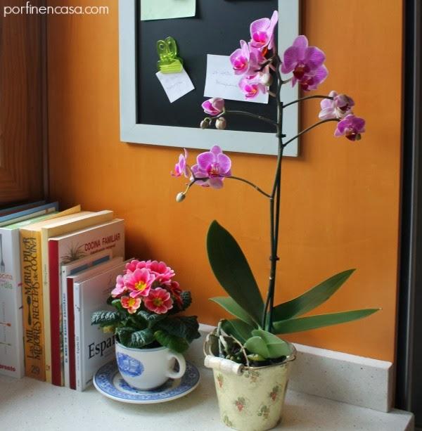 Prímula y orquídea