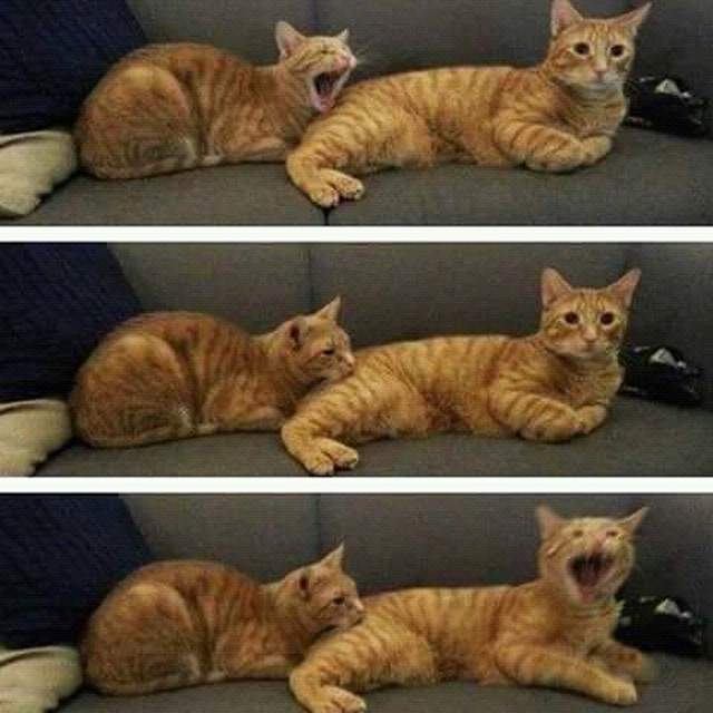 Funny cats - part 328, funny cat picture, best cat photo