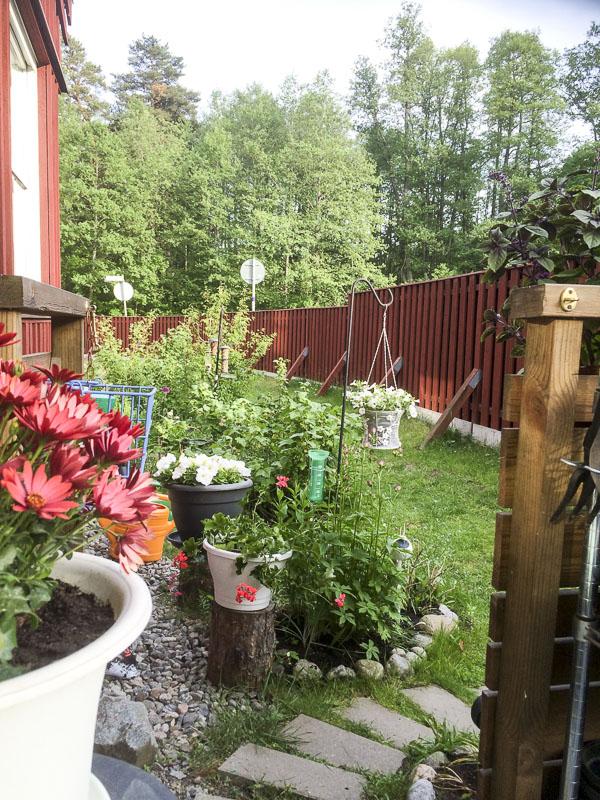 trädgården, garden