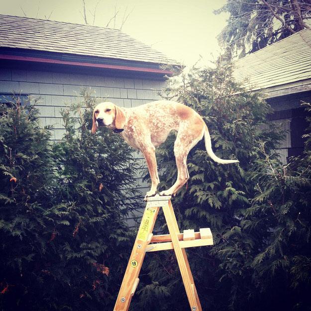 Maddie on Ladder